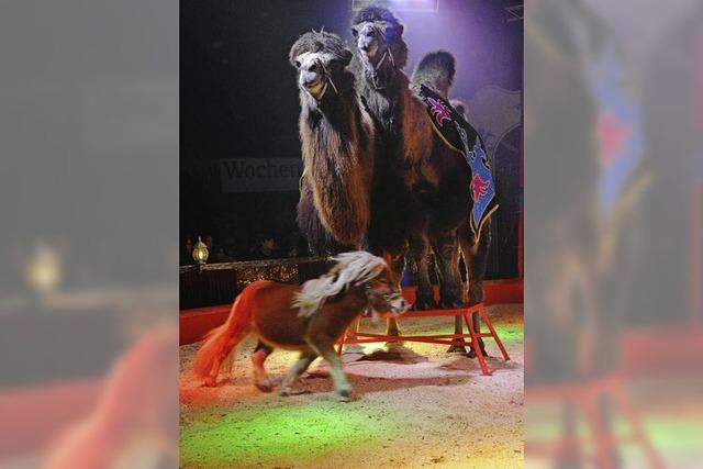Premiere des Lörracher Weihnachtscircus' begeistert das Publikum