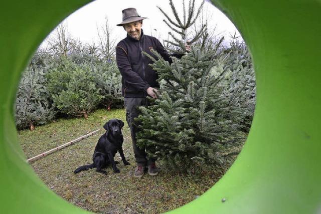 Warme Weihnachten: Es droht das große Nadeln