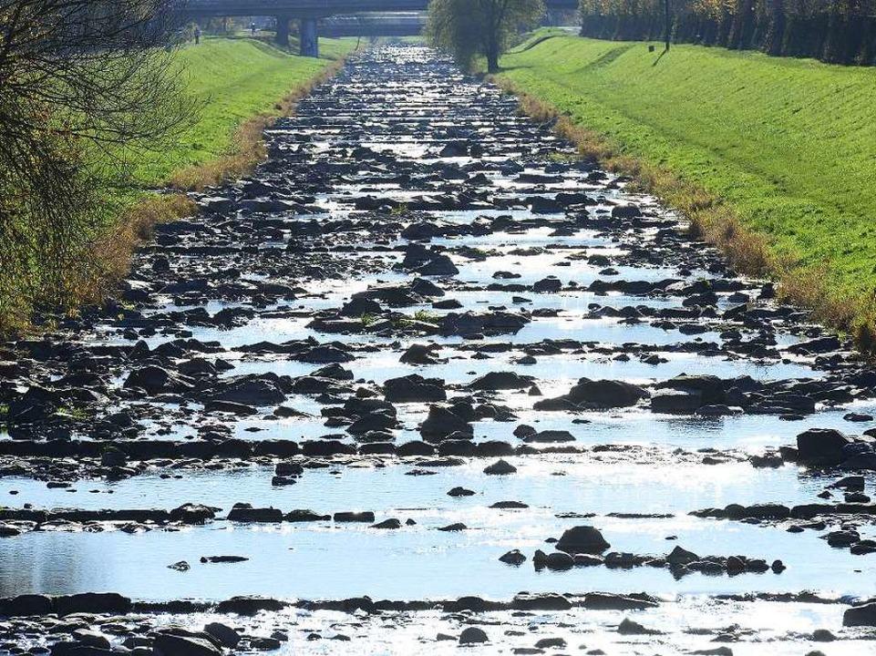 Viele Steine, wenig Wasser – typisch für die Dreisam in diesem Jahr  | Foto: Ingo Schneider
