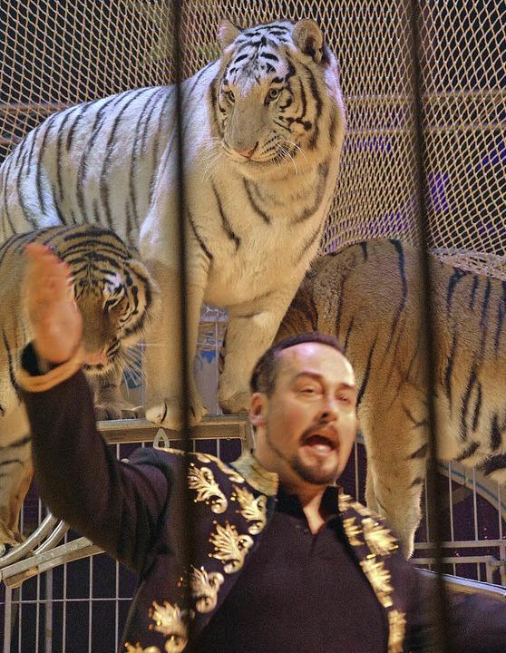 Karel Berousek mit Alex, dem Star seiner Tigergruppe     Foto: Barbara Ruda