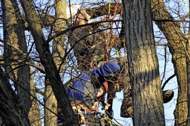 Bäume im Krone-Areal sollen künftige Haltinger Mitte schmücken