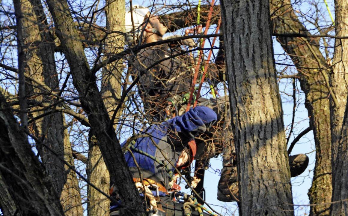Kletterausrüstung Weil Am Rhein : Bäume im krone areal sollen künftige haltinger mitte schmücken
