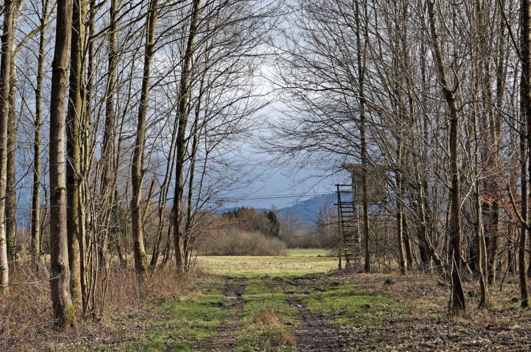 Über den Bestattungswald in Neuried wird 2015 viel diskutiert.     Foto: Jonas Schlenker