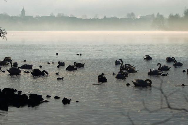 Wallbach im Nebel