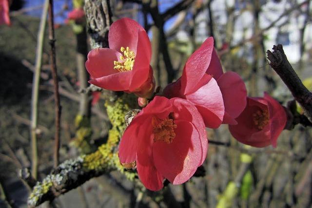 Blütenpracht zum Jahreswechsel