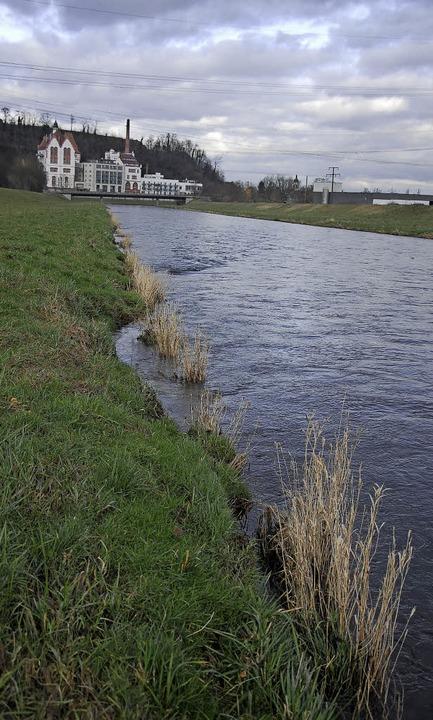 Das Wasser der Elz soll künftig bei Ri...nen. Dafür wird auch der Damm verlegt.    Foto: Archivfoto: Freya Saurer