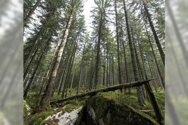 Mehr Wald schonen, Natur- und Artenschutz fördern