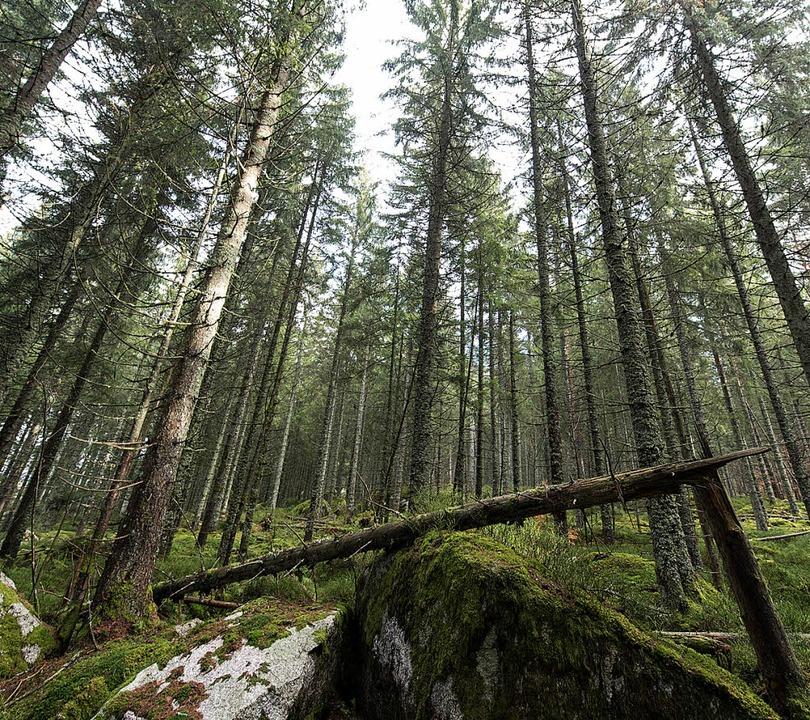 Ein Teil des Waldes soll nicht mehr wirtschaftlich genutzt werden.   | Foto: dpa