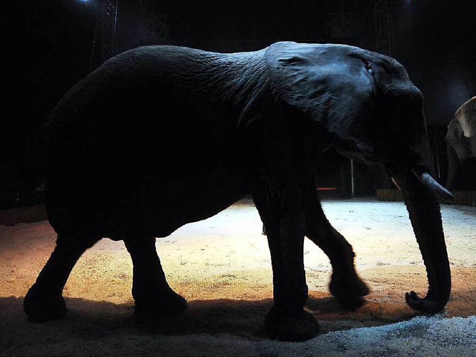 Umstritten: Elefanten im Zirkus.  | Foto: Thomas Kunz