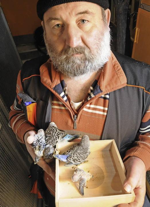 Vogelzüchter Edwin Sänger hat ein Herz...ischen Vogelarten beobachtet er gern.   | Foto: Robert Bergmann