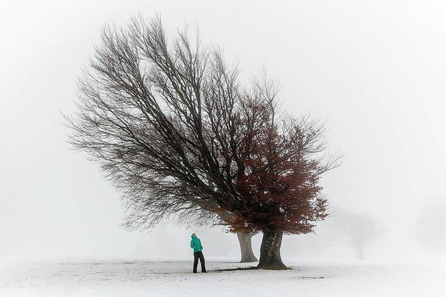 Schnee und Laub