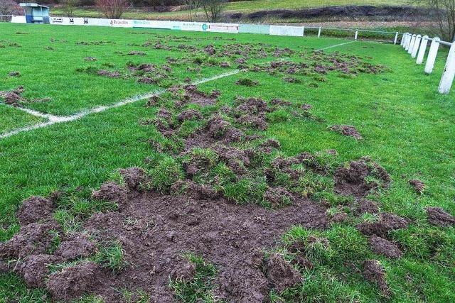 Wildschweine verwüsten Heimbacher Sportplatz