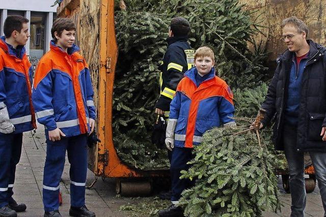 Jugendwehr sammelt Christbäume