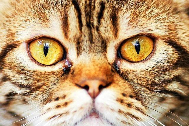 Freiburgerinnen erforschen das geheime Leben der Hauskatze