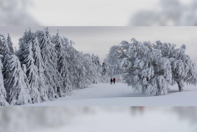 Schnee auf dem Schauinsland