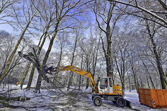 70 Bäume fallen im Möslepark