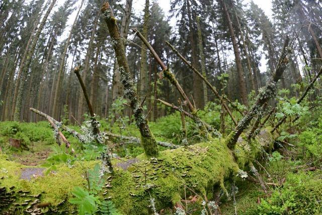 Flucht vor der Polizei endet im Wald