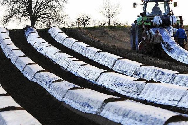 So bereiten sich die Bauern auf die Spargelzeit vor