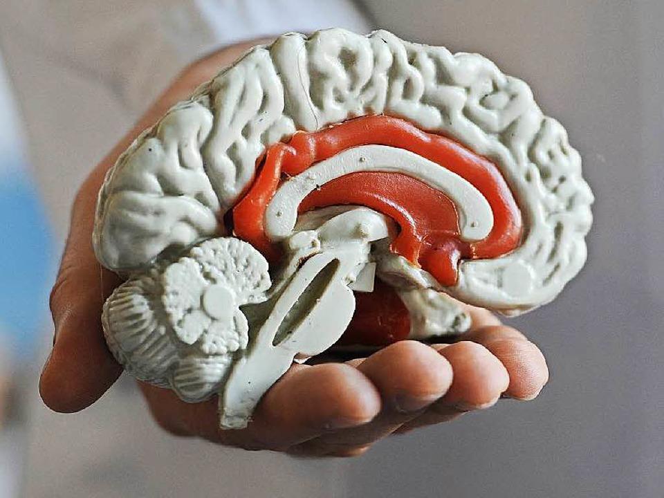 Sitz des Willens? Modell eines menschlichen Gehirns  | Foto: Deutsche Presse-Agentur