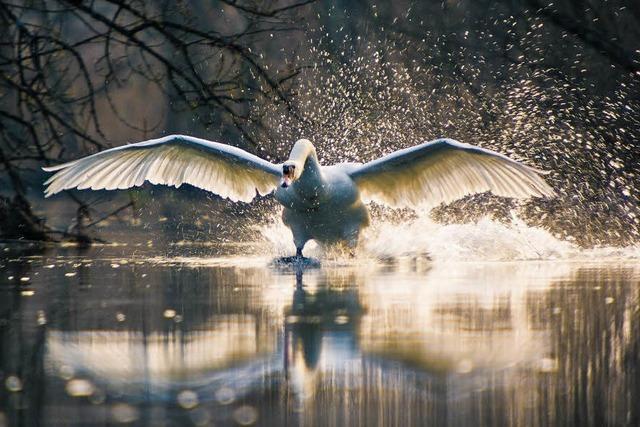 Leidenschaft für Natur und Licht