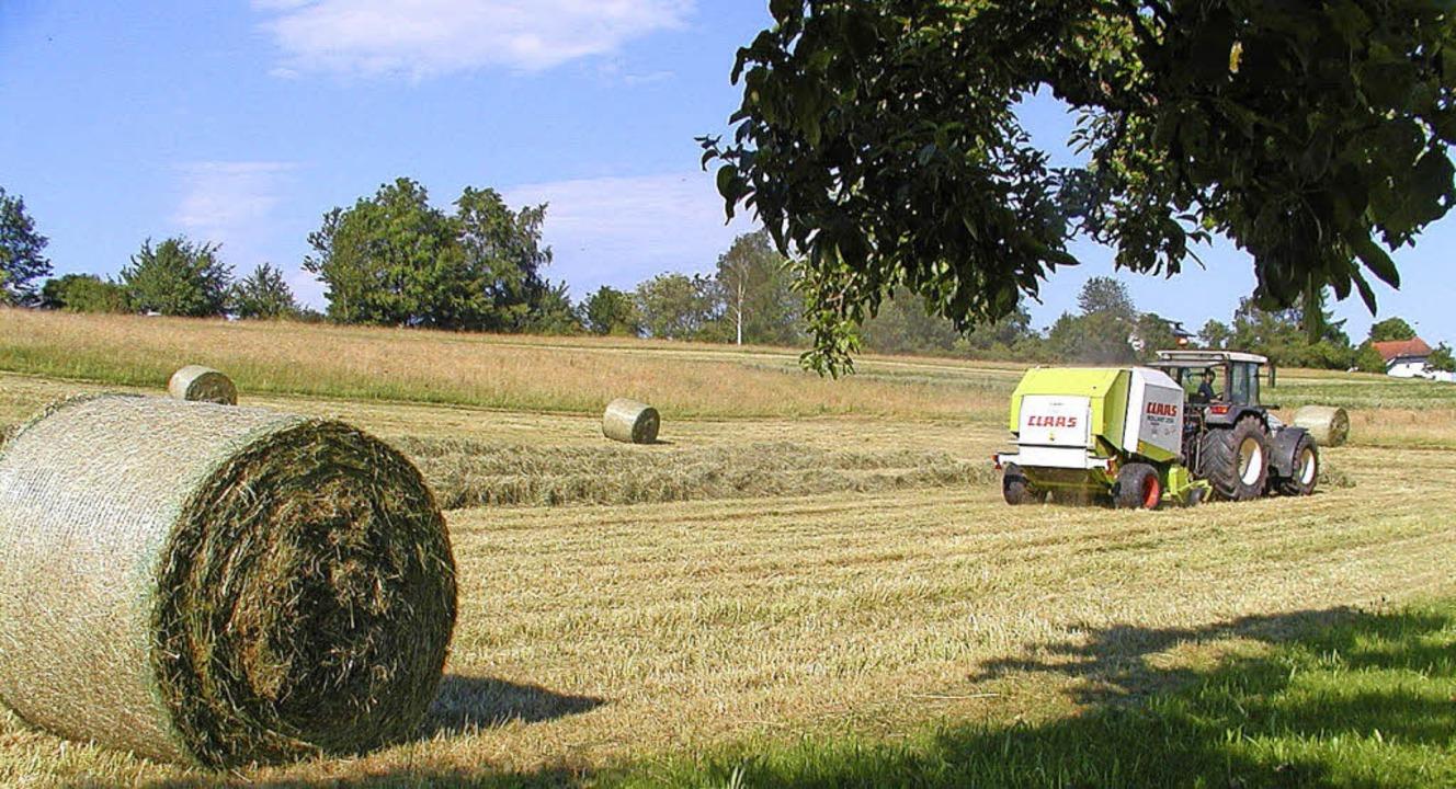 Auch Höfe auf dem Hotzenwald werden mit EU-Geldern unterstützt.  | Foto: Archivfoto: Wolfgang Adam