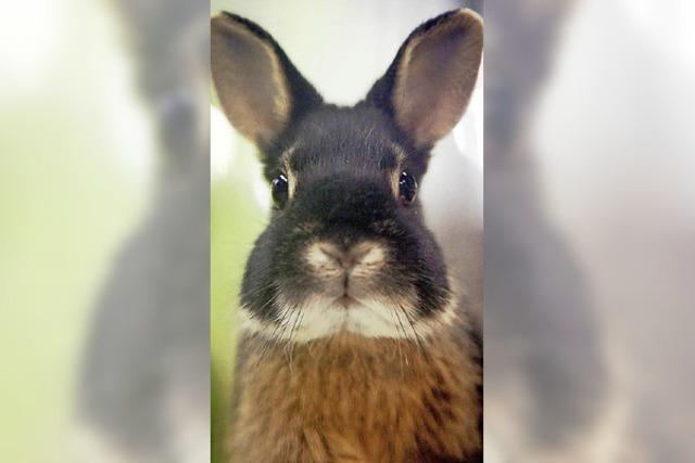Tausende von Kaninchen