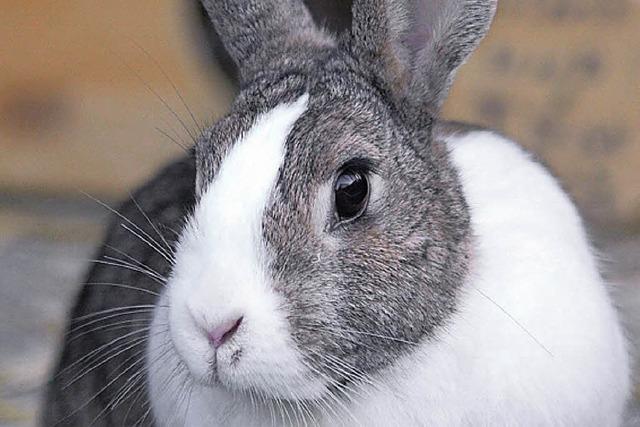 Tiere suchen ein Zuhause: munteres Kaninchenduo