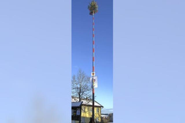 Baum nach alter Tradition aufgerichtet