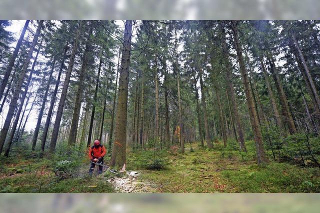 Der Gemeindewald steht gut da