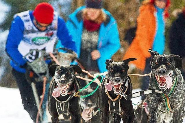 Schlittenhunderennen in Todtmoos findet statt