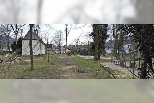 Die Eschen verschwinden vom Alten Friedhof