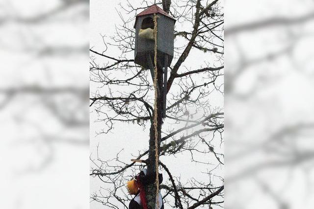 Narrenbaum steht sicher