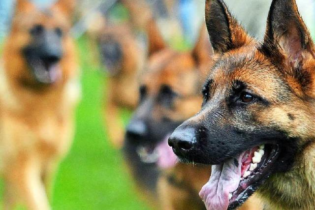Hund beißt zu – Herbolzheimer kämpft mit den Folgen
