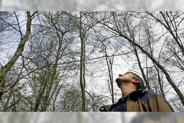 Winterbestimmung von Laubbäumen mit dem NABU