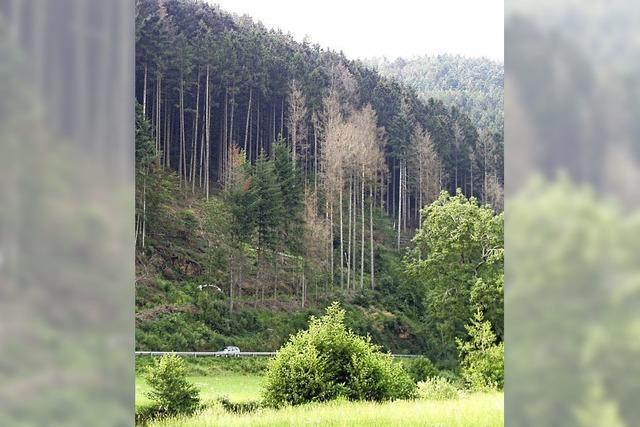 Der Wald stöhnt unter dem Klimawandel
