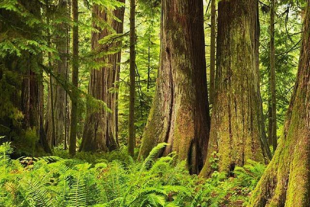 Spektakuläres Naturschutzgebiet an Kanadas Westküste