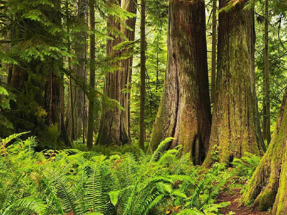 Blick in die schützenswerte Natur  auf Vancouver Island  | Foto: Sara Winter