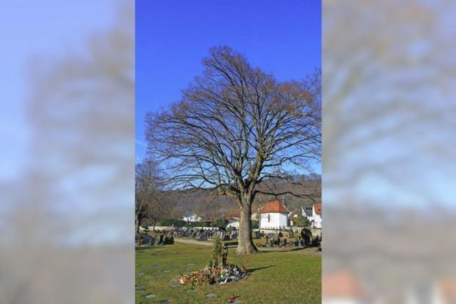 Degerfelden vermisst Bäume