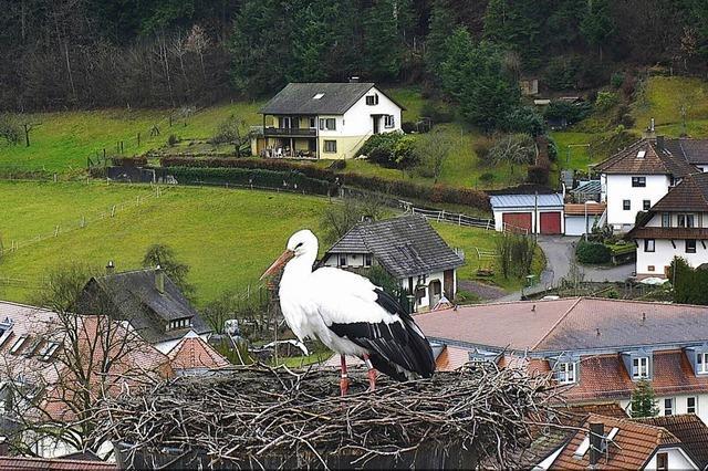 Webcam hat wieder Storch im Blick