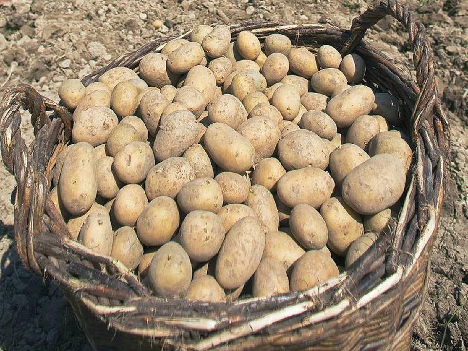Biokartoffeln wurden vergangenes Jahr neun Prozent teurer     Foto: dpa