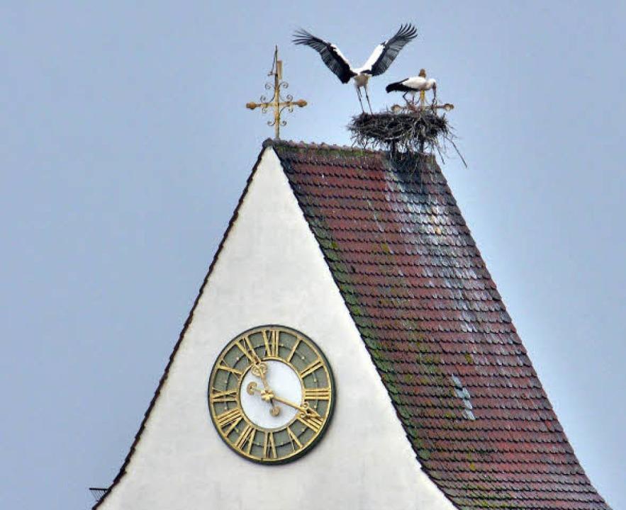 Angekommen sind die Störche in Munzingen  | Foto: Wolfgang Schupp