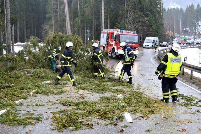 Sturmtief Ruzica fegt über den Hochschwarzwald - Narrenbäume vorzeitig gefällt