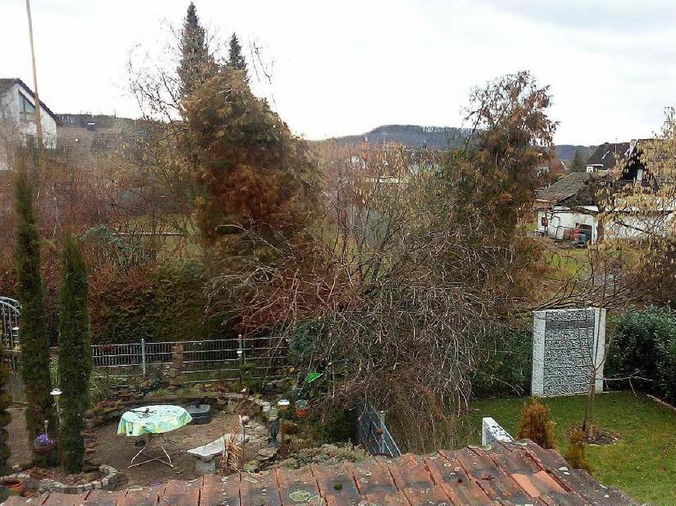 In Langenau wurden Zypressen und eine Weide umgeweht.   | Foto: Privat