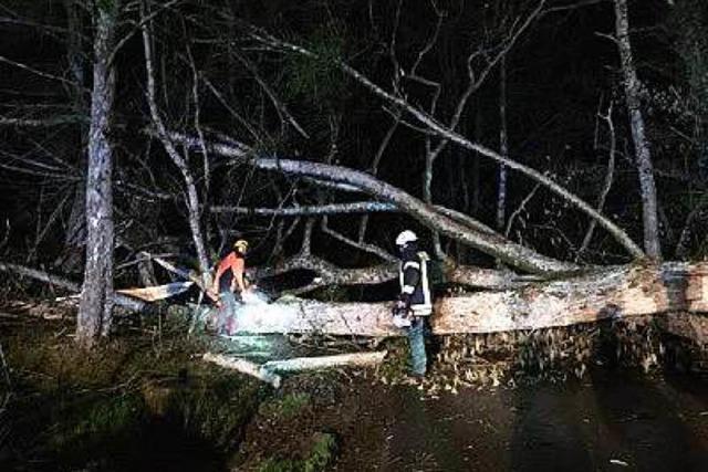 Sturmgeplagtes Plakat und umgestürzte Bäume