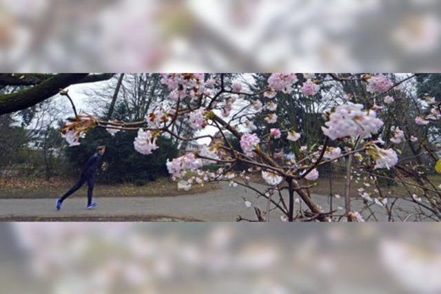 Frühling in der Joseph-Brandel-Anlage