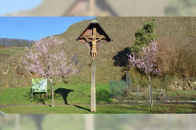 Mandelblüte am Kaiserstuhl