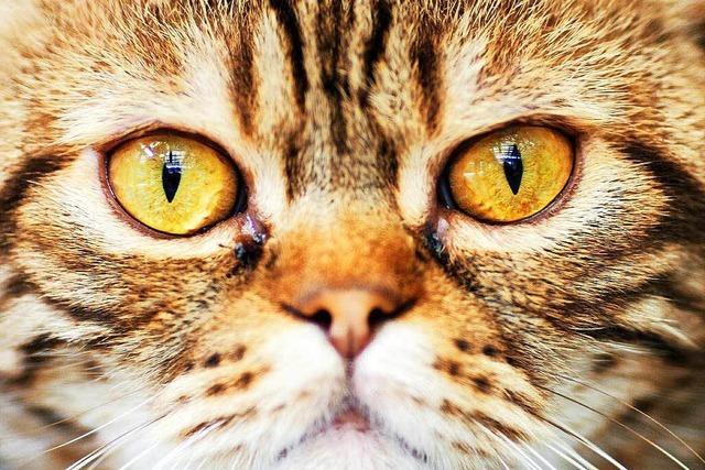 Unbekannter schießt auf Katze - Tier muss eingeschläfert werden