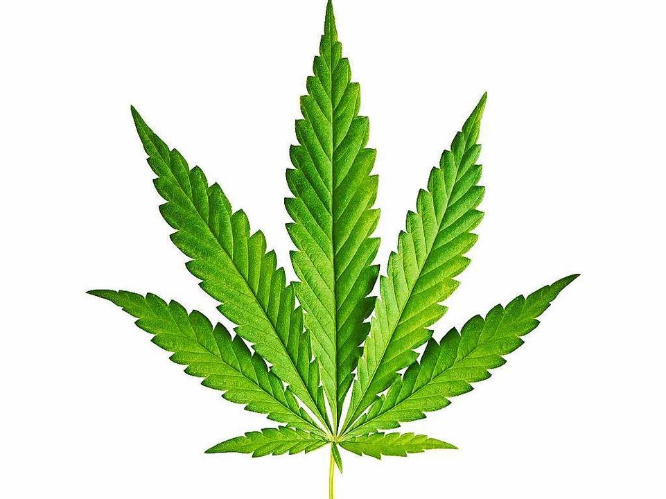 Cannabis  | Foto: boltenkoff - Fotolia