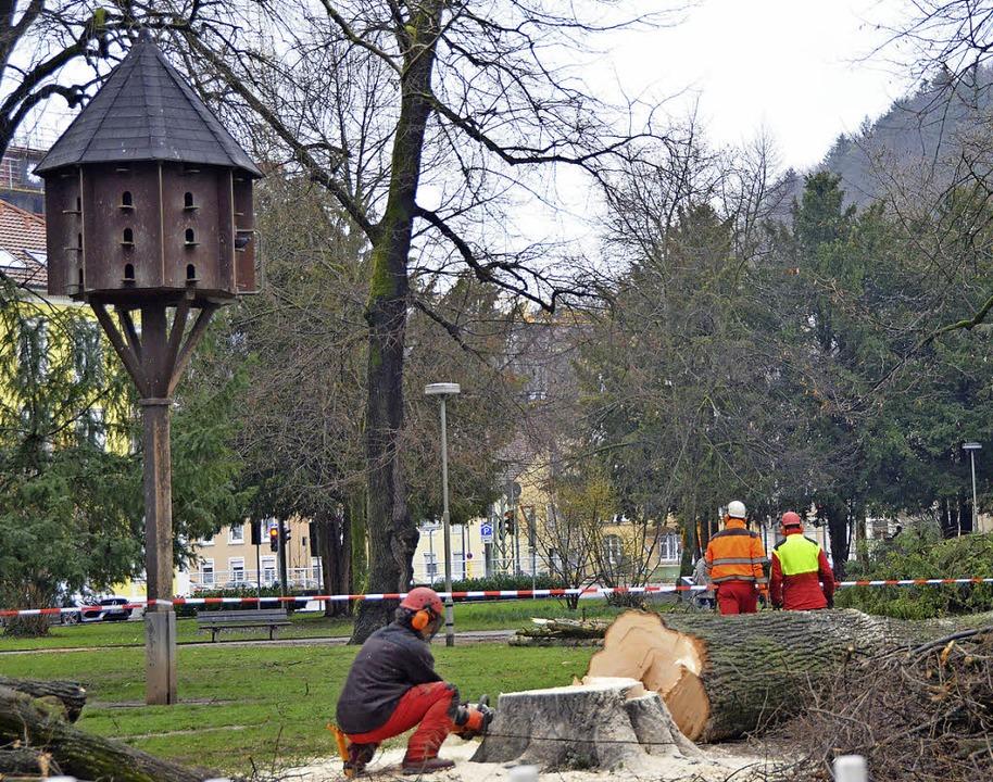 Die ersten Bäume sind gefallen     Foto: Elena Sausen