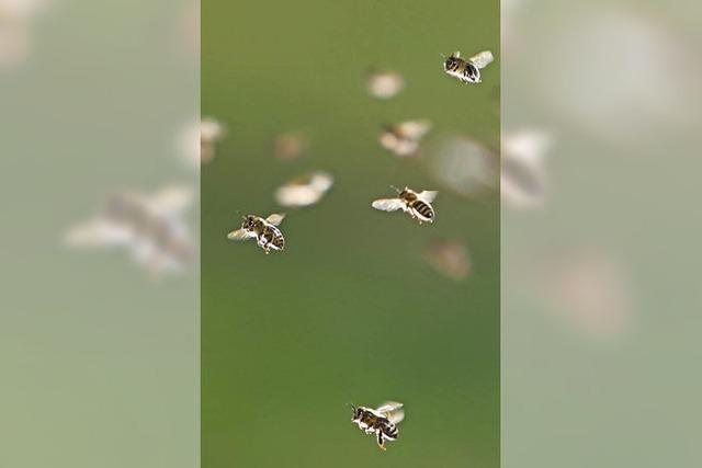 Für Blütenbestäuber und Schädlingsvernichter